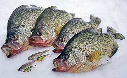 Crappie Fishing in Alexandria MN